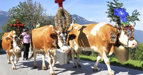 Údolí Pitztal a Kaunertal - alpské pokladnice pro seniory