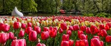Rozkvetlá krása Holandska