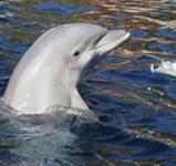 Delfinárium a Aquapark Palm Beach ***