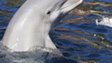 Delfinárium a Aquapark Palm Beach