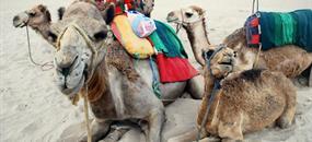 Maroko - poznávací zájezd