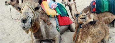 Maroko - poznávací zájezd ***