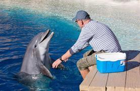 Norimberk a delfíni v místní ZOO - 1/13