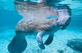 Norimberk a delfíni v místní ZOO - 2/13