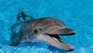 Norimberk a delfíni v místní ZOO