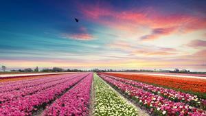 Květinový Keukenhof, ochutnávka sýrů a Amsterdam