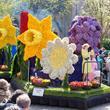 Holandsko s noclehem - Květinové korzo, Severní moře, sýry a Amsterdam