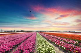 Holandsko s noclehem - Květinové korzo, Severní moře, sýry a Amsterdam - 5/27