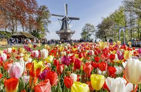 Holandsko s noclehem - Květinové korzo, Severní moře, sýry a Amsterdam - 18/27