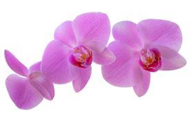 Výstava orchidejí v Drážďanech - 5/11