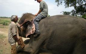 Nepál: Divoká zvířata ve stínu Himalájí
