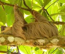 Fascinující deštné pralesy Kostariky