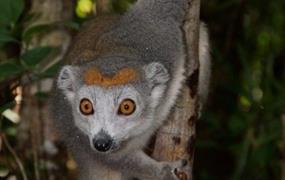 Za lemury po národních parcích Madagaskaru - s odpočinkem na pirátském ostrově