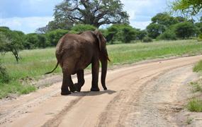 Safari v neobjevených rezervacích jižní Tanzanie