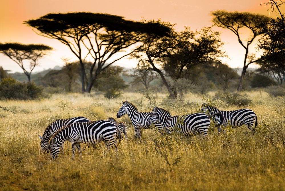 Telefonování v Keni