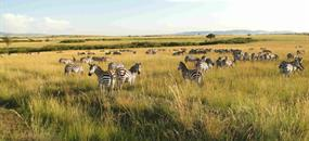 Camping Amboseli a Tsavo Safari v Keni