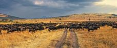 Jezero Nakuru a Masai Mara Safari