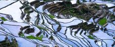 Kontrastní Manila, rýžové terasy a skvostný Boracay