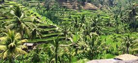 Rajské ostrovy Gili a poznávání Bali