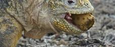Galapágy - nedotčená příroda želvích ostrovů