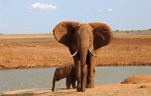 Safari okruh v kempech