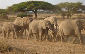 Fascinující národní parky Keni a Tanzanie