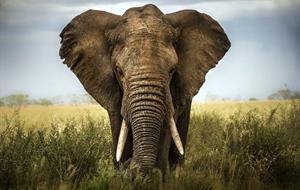 Komfortní safari okruh v Keni a odpočinek na Zanzibaru