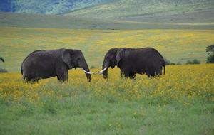 Rozšířený safari okruh severní Tanzánií