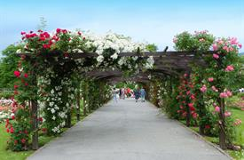 Zámek Laxenburg, Slavnosti růži v Badenu