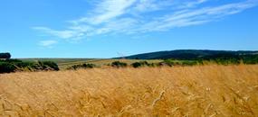 Letní zelená dovolená v kraji Žítkovských...