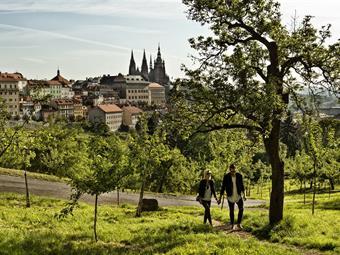 CAROL - Praha