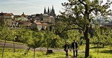 CAROL - Praha 9 - Libeň