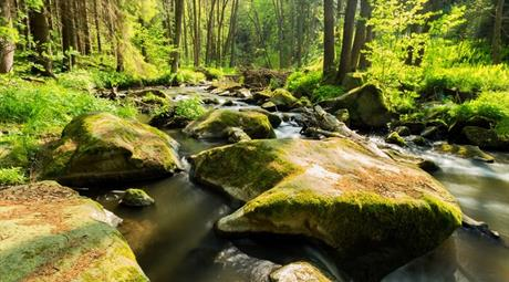 Žďárské vrchy - klid a pohoda na Vysočině