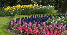 Holandsko, Velikonoce v zemi tulipánů s ubytováním v Rotterdamu 2020