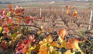 Beaujolais a Burgundsko, kláštery a slavnost vína 2020