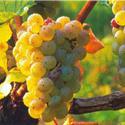 Babí léto, tajemné jeskyně Slovinska a Itálie, víno a mořské lázně Laguna 2021