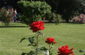 Vídeň po stopách Habsburků, Schönbrunn i Laxenburg a Baden, slavnost růží a historické zahrady 2021