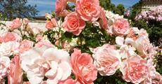 Berlín, biosferická rezervace UNESCO a slavnost růží v Rosariu 2021