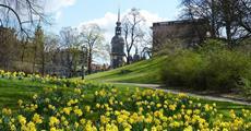 Drážďany, Míšeň, zahrady a kamélie v Pillnitz a výstava orchidejí 2022