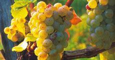 Babí léto, tajemné jeskyně Slovinska a Itálie, víno a mořské lázně Laguna 2022