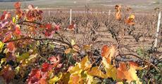 Beaujolais a Burgundsko, kláštery a slavnost vína 2022