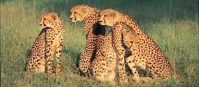 Safari v Keni - To nejlepší z Keni ***+