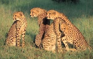Safari v Keni - To nejlepší z Keni