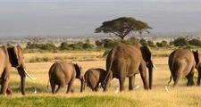 Safari v Keni - Ve stínu Kilimanjara + pobyt u moře