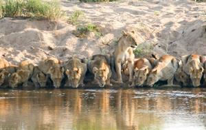 Po vlastní ose - Luxusní safari v Krugerově národním parku
