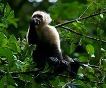 Poznávací zájezd - To nejlepší z Kostariky s českým průvodcem