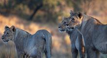 Safari v Tanzanii - Klenoty severní Tanzanie s českým průvodcem