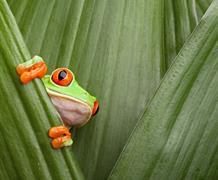 Poznávací zájezd - Přírodní perly Kostariky a pobyt u moře