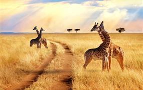 Safari v Tanzánii - to nejlepší ze severní Tanzánie s českým průvodcem