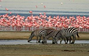 Tanzanie - plameňáci u jezera Natron a mnohem více